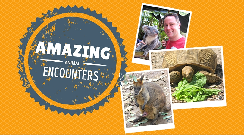 Amazing Animal Encounters You Need to Experience!