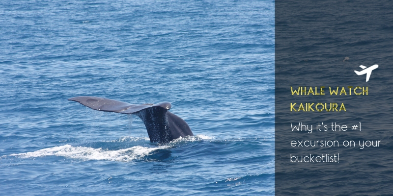 Why Whale Watch Kaikoura needs to be #1 on your bucket list!