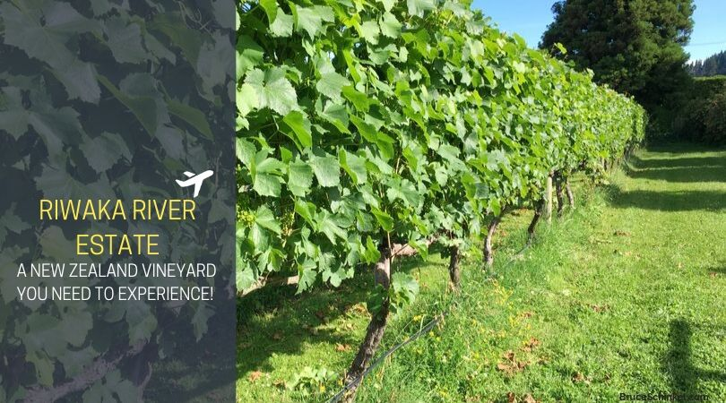 Riwaka River Estate Needs To Be A New Zealand Vineyard You Experience!